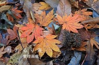 2019-1130-2・ブ.JPG