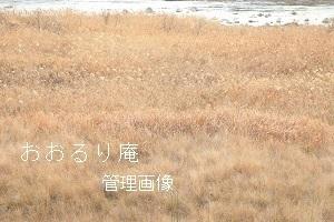 2020-0202-1・ブ.JPG