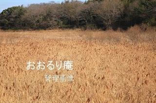 2020-0207-1・ブ.JPG